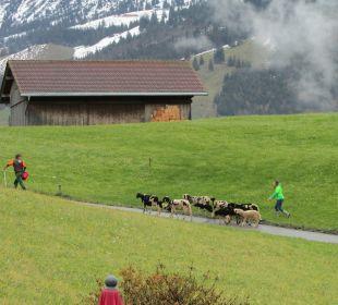 Ausblick Schwandenhof Ferienwohnungen