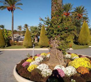 Botanik pur Hotel Horizon Beach Resort