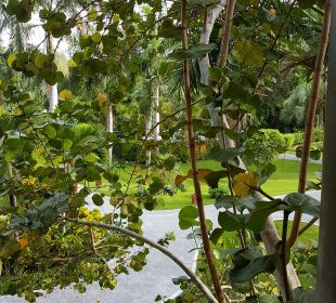Gartenanlage Iberostar Bávaro Suites