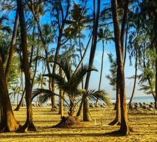 Blick auf Strand  Hotel Vista Sol Punta Cana