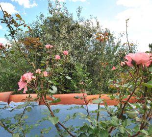 Rosen im Süden der Residence Holiday Residence Rifugio
