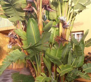 Gartenanlage Apartamentos La Caleta