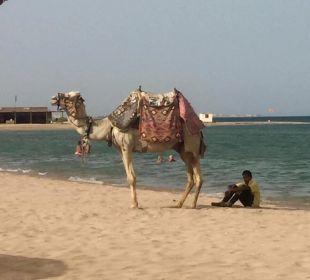 Wunderschöner Sandstrand Hotel Shams Safaga