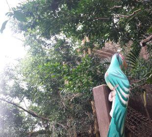Dchungel Center Parcs Het Heijderbos