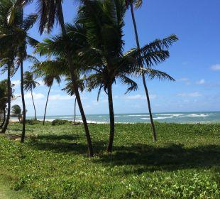Palmen am Strand IBEROSTAR Hotel Bahia