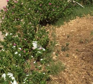 Verschmutzte Gartenanlage