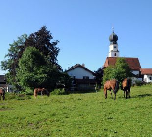 Blick auf die Pferde am Wimmerhof in Ising. Wimmerhof Ising