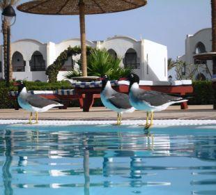 Pool Hotel Gorgonia Beach