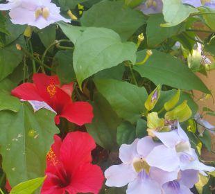 Blumen im Garten Galo Resort Galosol
