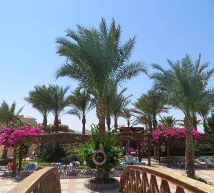 Schöne Palmen