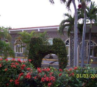 Die sehr gepflegte grüne und blühende Außenanlage Hotel Club Amigo Bucanero (existiert nicht mehr)