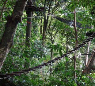Tree Top Adventure Hotel Mercure Koh Chang Hideaway