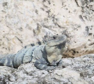 Tiere in der Anlage  Secrets Maroma Beach Riviera Cancun