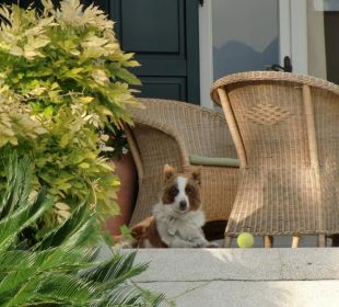 Einer der Hunde auf der Terrasse Hotel Villa Moretti
