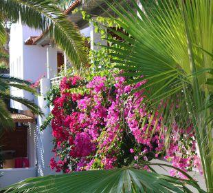 Gartenanlage Annabelle Beach Resort AKS Annabelle Beach Resort