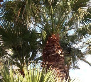 Palmen in der Hotelanlage JS Hotel Yate