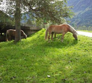 Pferderast Bio Bauernhof Knaller