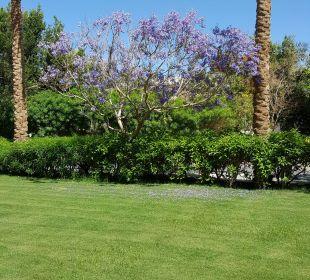 Bäume Stella Di Mare Beach Resort & Spa Makadi Bay