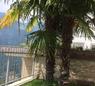 Palme Hotel Panorama