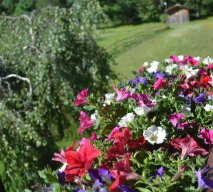 Die schönen Blumen auf dem Balkon Landhaus Rudigier