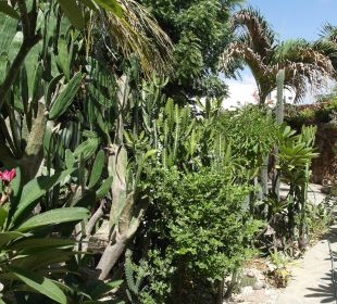 Garten Guesthouse StevieWonderLand