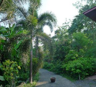 Privatsrrasse direkt zum Haus. Guest House Green Garden House