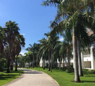 Gartenanlage Grand Riviera Princess All Suites & Spa Resort