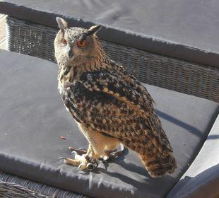 Romy bei der Vogel-Demonstration beim Panorama Hotel Panorama