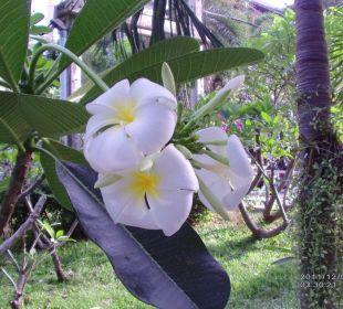 Blume im Garten Hotel Pattaya Garden