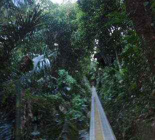 Seilbahn Hotel Nandini Bali Jungle Resort & Spa
