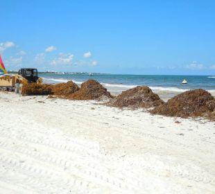 Schlimm... Secrets Maroma Beach Riviera Cancun