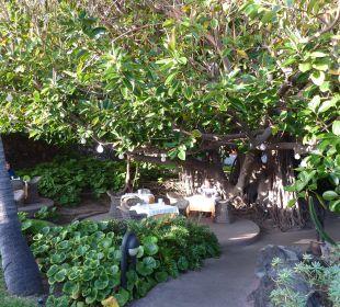 Essecke unter einem risiegen Gummibaum, einmalig! Hotel Hacienda San Jorge