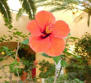 Gepflegter Garten Vantaris Beach Hotel