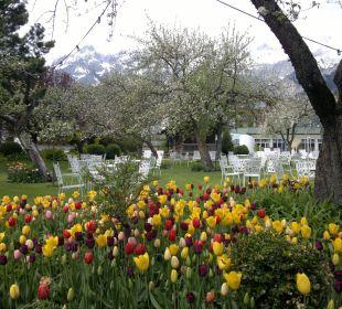 Frühling im Tulpengarten Alpenresort Schwarz