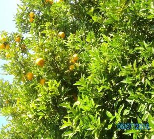 Orangenbaum Hotel Livadi Nafsika