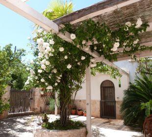 Gartenanlage Bed & Breakfast Trullo Casa Rosa