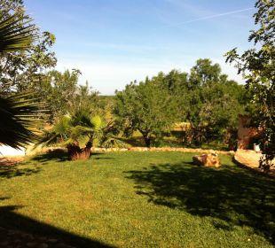 Blick in den Garten  Finca Es Pinaretta