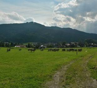 Blick über die Wiesen beim Bauernhof