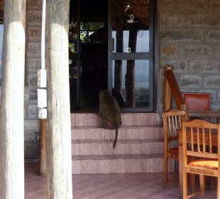 Einbruch in das Restaurant Hotel Lake Nakuru Lodge