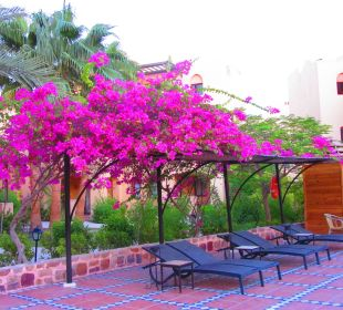 Farbenfroh Hotel Steigenberger Coraya Beach