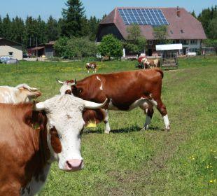 Unsere Kühe Ferienbauernhof Oberjosenhof