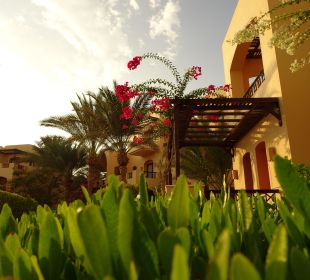 Gartenblick Hotel Steigenberger Coraya Beach