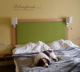 """Doppelzimmer Größe """"Labrador"""" Hotel Grimming"""