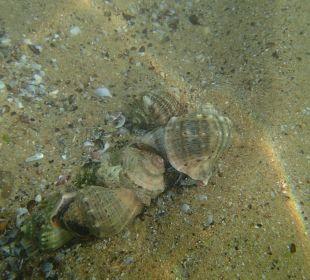 W morzu przy plaży Sol Luna Bay & Mare Resort