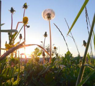 Sonnenaufgang, Morgenstimmung Ferienwohnungen Berghof Kinker