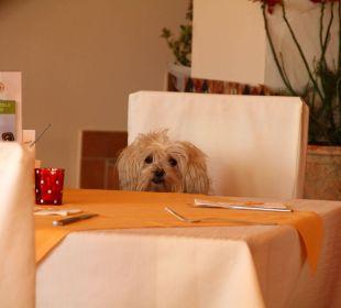 Hunde herzlich Willkommen! Landhaus FühlDichWohl