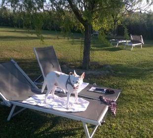 Blanca auf der Hundeinsel Seehotel Rust