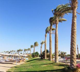 Ein wenig Palm.Beach