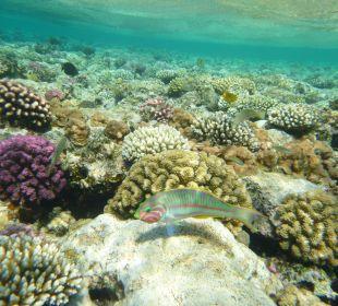 Fauna i flora była przepiękna. Melia Sharm Resort & Spa