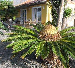 Gepflegte Gartenanlage Villen Los Lomos